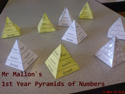 food chain pyramid worksheet. Pyramid of numbers